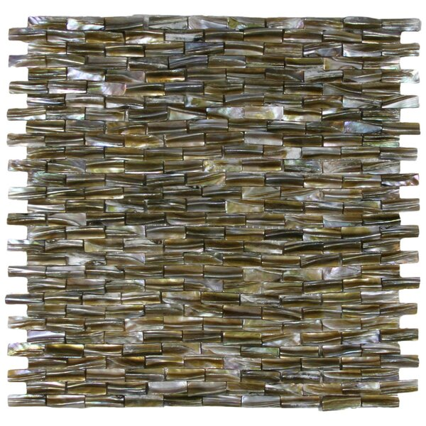 Kelp 0.8 x 1 Seashell Mosaic Tile in Golden Brown by CNK Tile