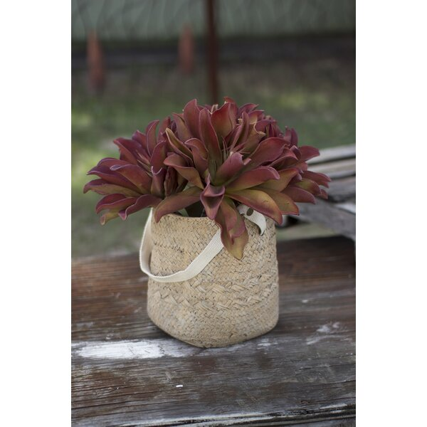 Wolfson Woven Long Cotton Handle Cement Pot Planter by Gracie Oaks