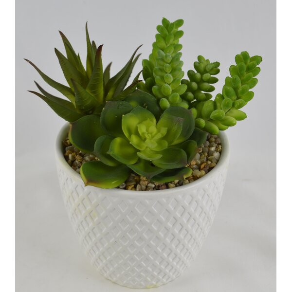 Desktop Succulent Plant in Ceramic Pot (Set of 2) by George Oliver