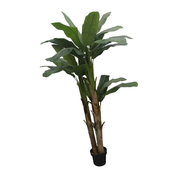 Banana Leaf Floor Foliage Tree in Pot by Brayden Studio