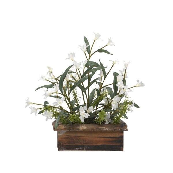 Phlox Desktop Flowering Plant in Planter by Bay Isle Home