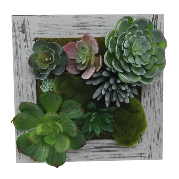 Square Picture Frame Desktop Succulent Plant by Bungalow Rose