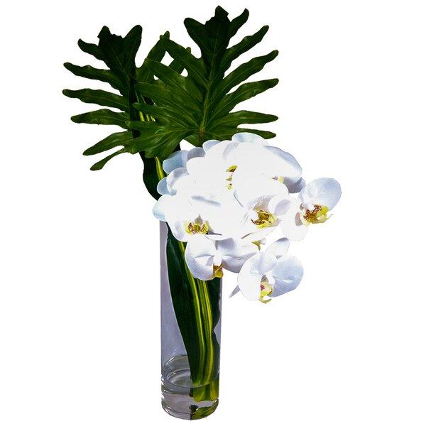 Phalaenopsis Orchid Xanadu Leaves Floral Arrangement in Vase by Bloomsbury Market