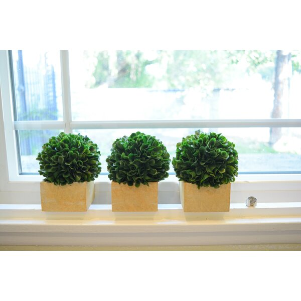 Faux Preserved Boxwood Desktop Topiary in Pot (Set