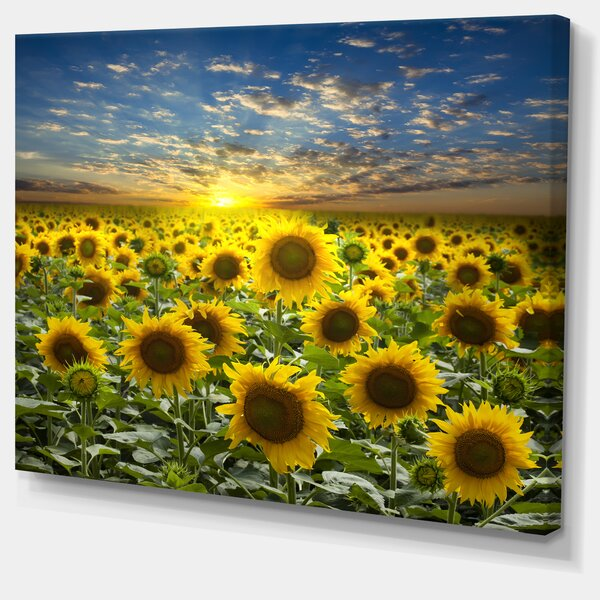 Field of Blooming Sunflowers Photographic Print on Wrapped Canvas by Design Art