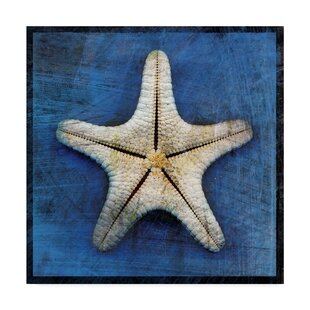 'Armored Starfish Underside' Graphic Art Print on Wrapped Canvas by Trademark Fine Art