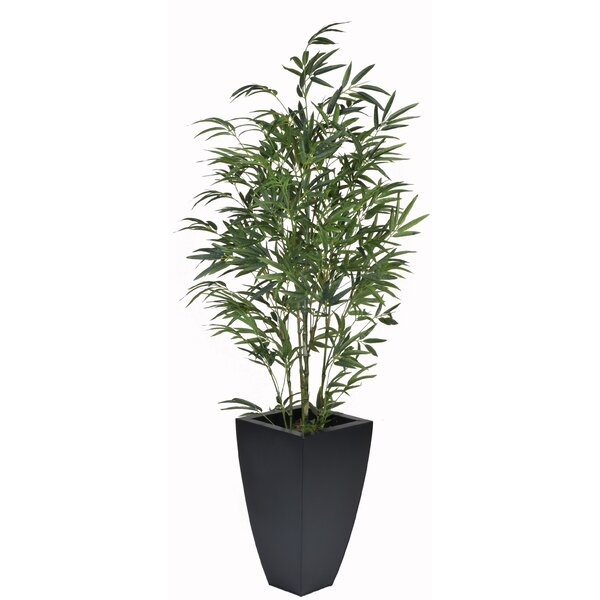 Bamboo Floor Plant in Planter by House of Silk Flowers Inc.