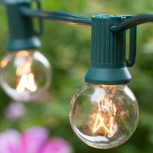 25-Light Globe String Lights By Wintergreen Lighting Outdoor Lighting