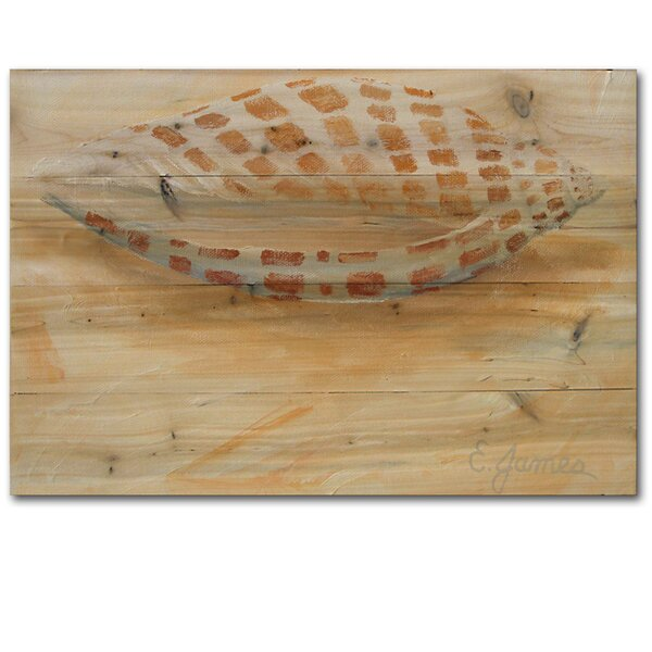Sea Shell 4 Painting Print Plaque by WGI-GALLERY