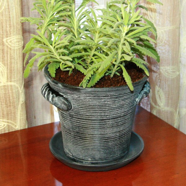 Wiegand Rustic Charm Ceramic Pot Planter by Gracie Oaks
