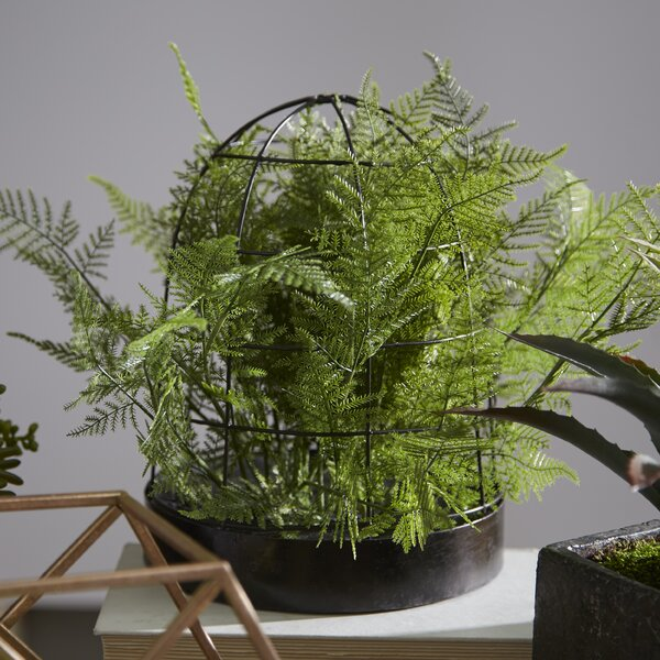Asparagus Fern Housed Foliage Plant in Planter by Picnic at Ascot