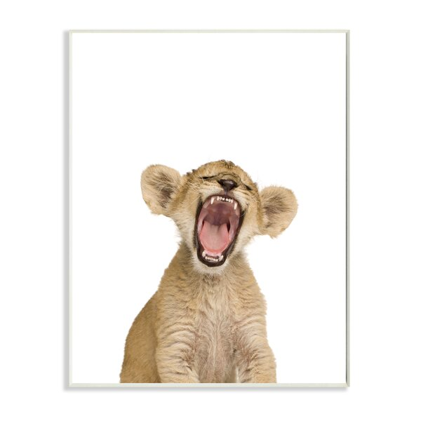 Baby Lion Cub Studio Photo Wall Plaque by Stupell Industries