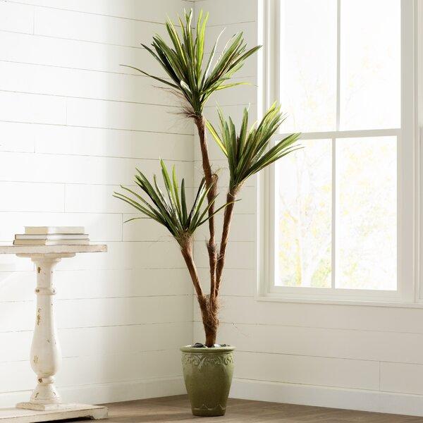 Tropical Yucca Tree by Mistana