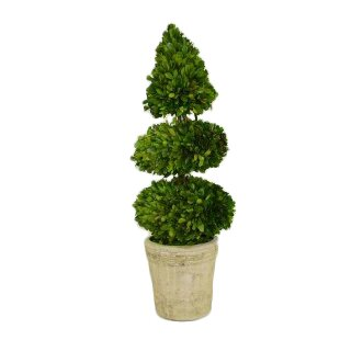 Preserved Boxwood Topiary in Pot by The French Bee