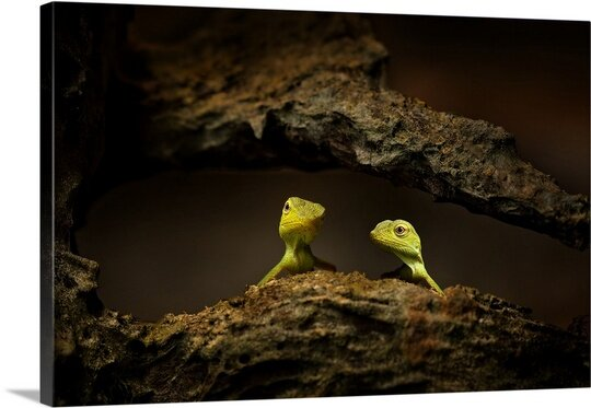 Brothers by Tan Ce Khiong Photographic Print on Canvas by Canvas On Demand