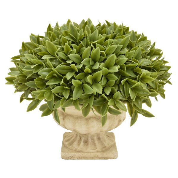 Desktop Foliage Topiary in Pot by Charlton Home