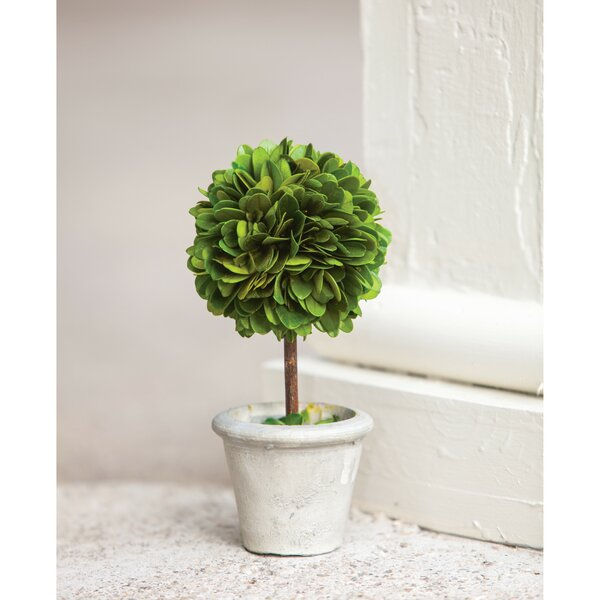Mini Desktop Boxwood Topiary in Pot by Charlton Home