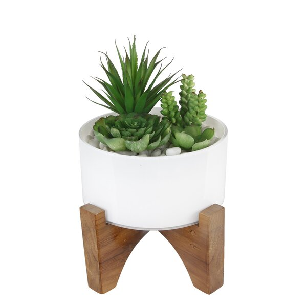 Desktop Succulent and Moss Plant in Pot by Bungalow Rose