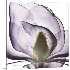 Magnolia X-Ray by Albert Koetsier Photographic Print on Canvas by Great Big Canvas