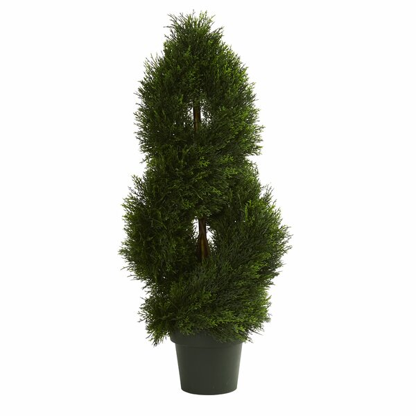 Double Pond Cypress Spiral Cedar Topiary in Pot by Astoria Grand