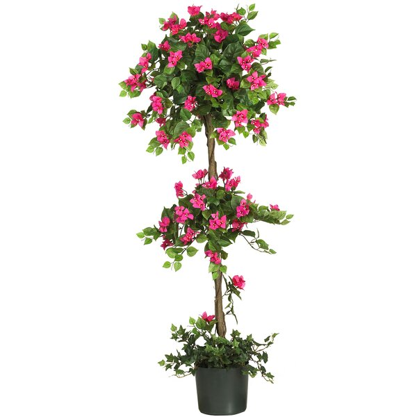 60 Mini Bougainvillea Round Topiary in Planter by Red Barrel Studio