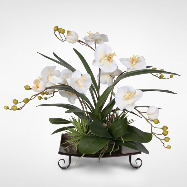 Silk Phalaenopsis Orchids with Succulents Floral Arrangement by Darby Home Co