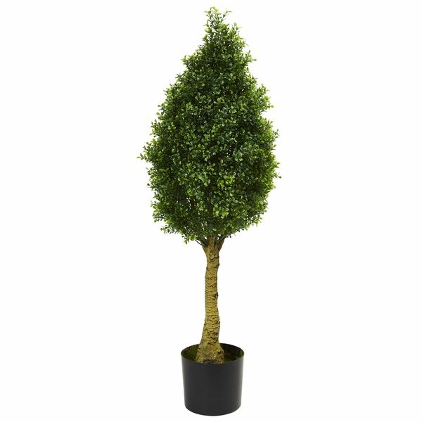 Boxwood Topiary by Darby Home Co