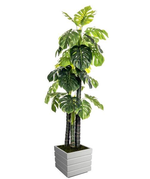 Floor Foliage Monstera Ceriman Tree in Planter by Wildon Home ®