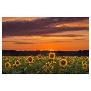 Sunset Over Sunflowers Photographic Print by Prestige Art Studios