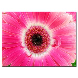 Pink Gerber by Kurt Shaffer Framed Photographic Print on Wrapped Canvas by Trademark Fine Art