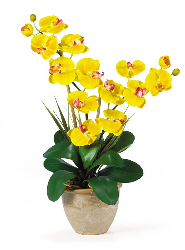 Nearly natural double phalaenopsis silk orchid flower in yellow double phalaenopsis silk orchid flower in yellow mightylinksfo