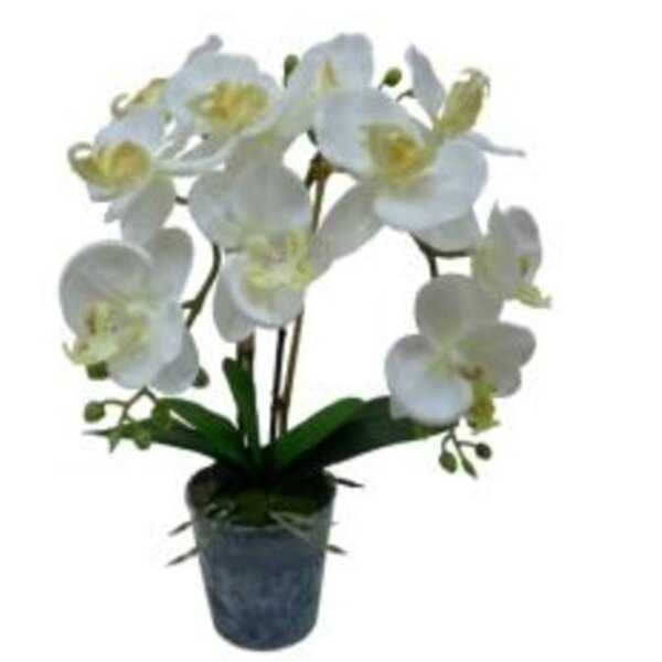 Blooming Phaleanopsis Orchids Floral Arrangement in Pot by Bay Isle Home