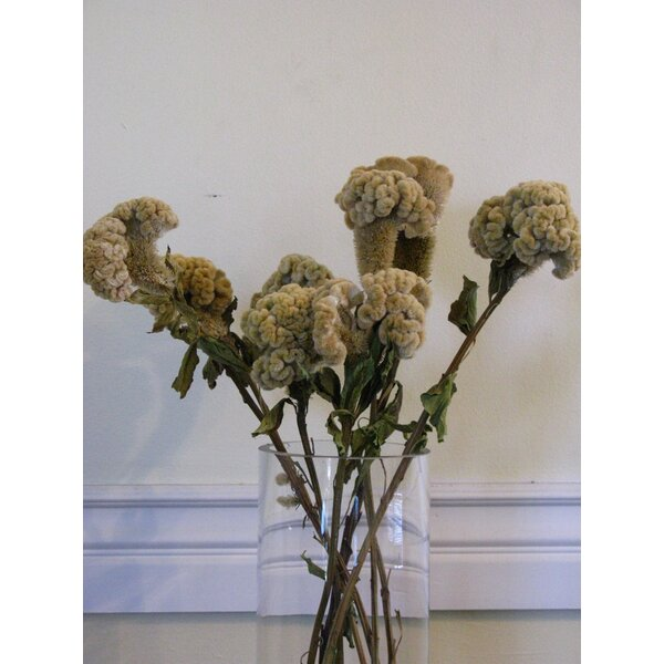 Dried Buff Coxcomb Floral Arrangements by From the Garden