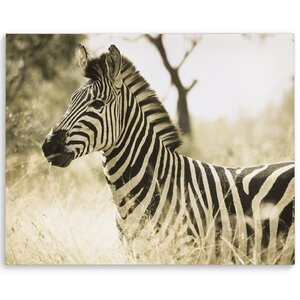 'Zebra' Photographic Print on Wrapped Canvas by KAVKA DESIGNS