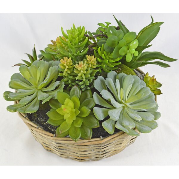 Desktop Succulent Plant in Basket by Latitude Run