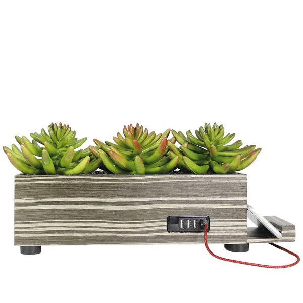 Desktop Succulent Grass in Planter by Orren Ellis