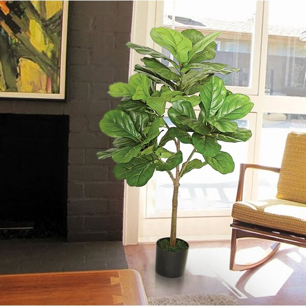 Large Leaf Fig Tall Floor Ficus Tree in Pot by Langley Street