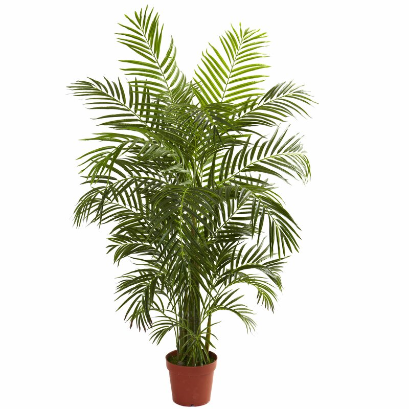 Areca Palm Tree Floor Plant In Pot