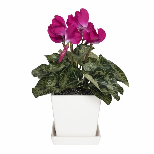 Cyclamen Floral Arrangement in Planter by House of Hampton