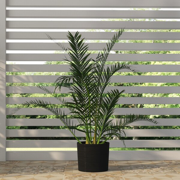 Areca Palm Tree Floor Plant by Beachcrest Home