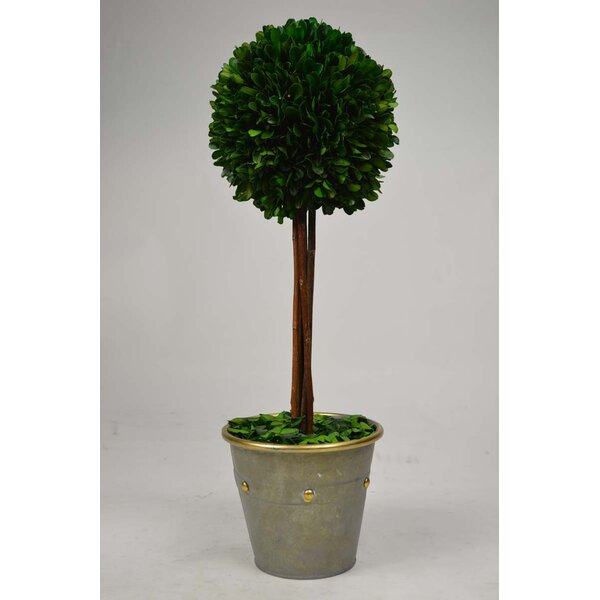 Ball Metal Boxwood Topiary in Planter by GT DIRECT CORP