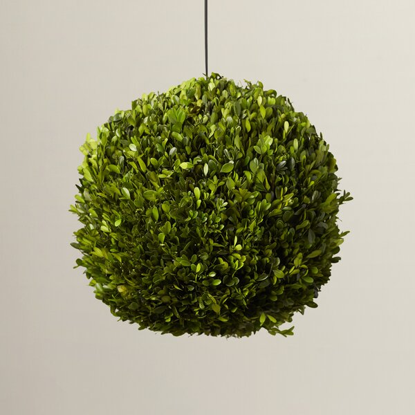 Preserved Boxwoods Ball Topiary by One Allium Way