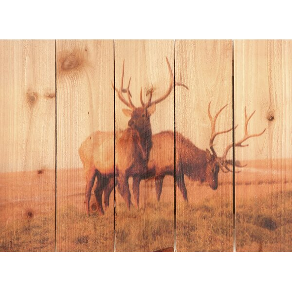Bull Elk Photographic Print by Gizaun Art