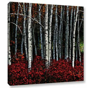 Red Birch Photographic Print on Wrapped Canvas by Red Barrel Studio