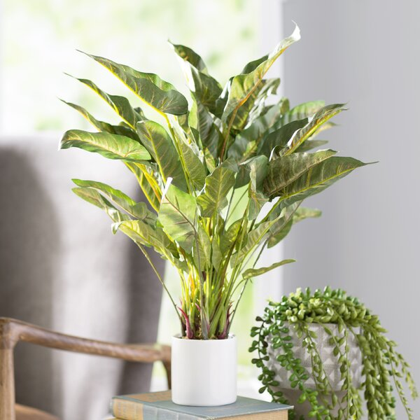 Modern Elephant Ear Foliage Plant in Planter by Mistana