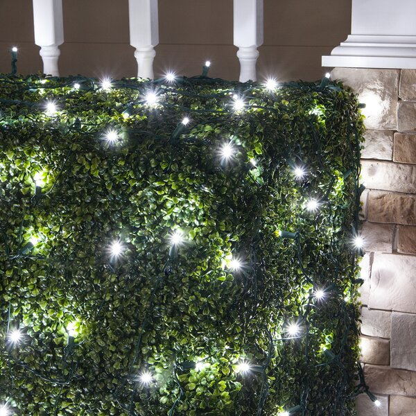 100 Lamps LED Christmas Net Light by Wintergreen Lighting