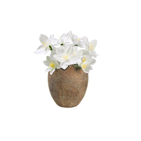 Paperwhite Silk Flower in Easter Egg Pot by Northlight Seasonal