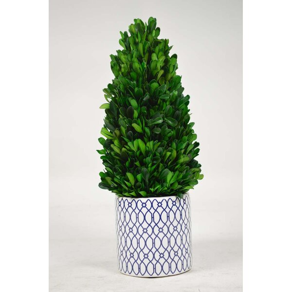Desktop Tower Boxwood Topiary in Planter by GT DIRECT CORP