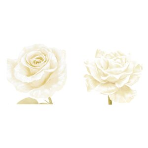 White Rose 2 Piece Framed Graphic Art Set by PTM Images