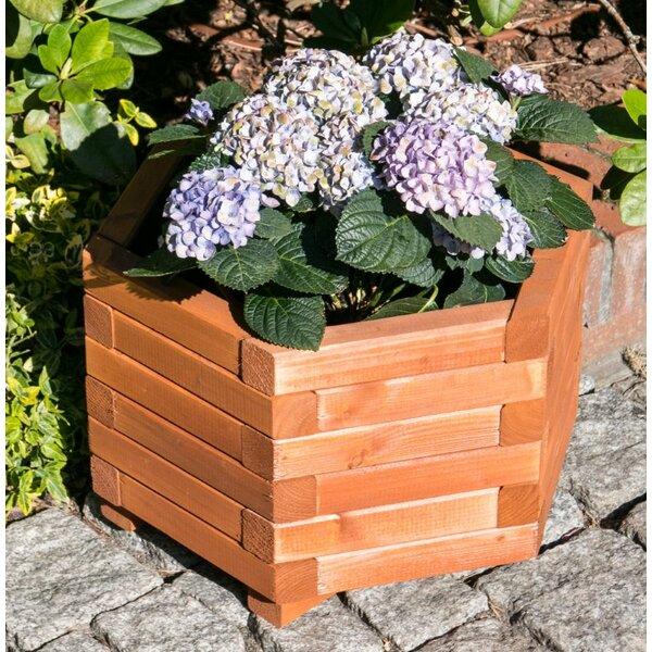 Hexagona Golden State Spruce Planter Box by European Garden Living
